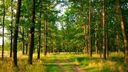 ЕГАИС-лес начала применять компания ООО КМДК «СОЮЗ-Центр»